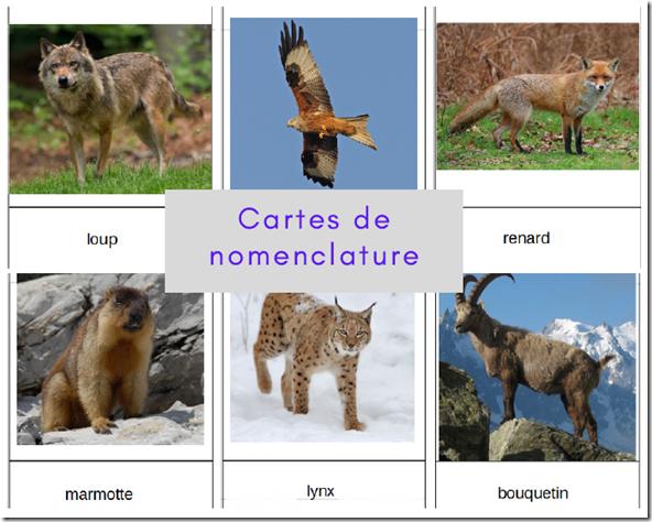 Le jeu des cartes de nomenclature Montessori est utilisé dans toutes les écoles Montessori.