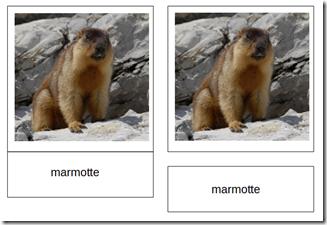 Sur une des deux séries de cartes de nomenclature Montessori, je t'invite à dissocier le nom de l'image